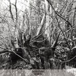 thisquietarmy ‐‐Review‐‐